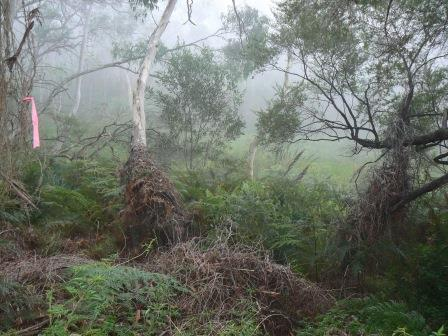 Mist in Best Valley swamp