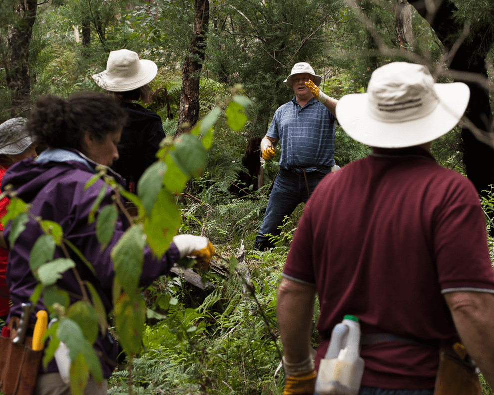 Long angle Gully Catchment Care Day 2015 volunteers