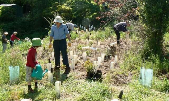 Upper Kedumba Planting Day