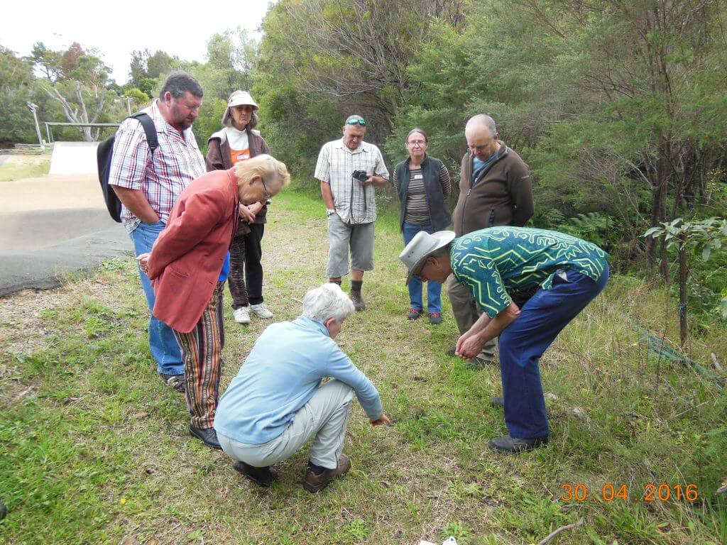 On site with Geoff and some of the group looking at some fauna evidence at South Lawson Bushcare site