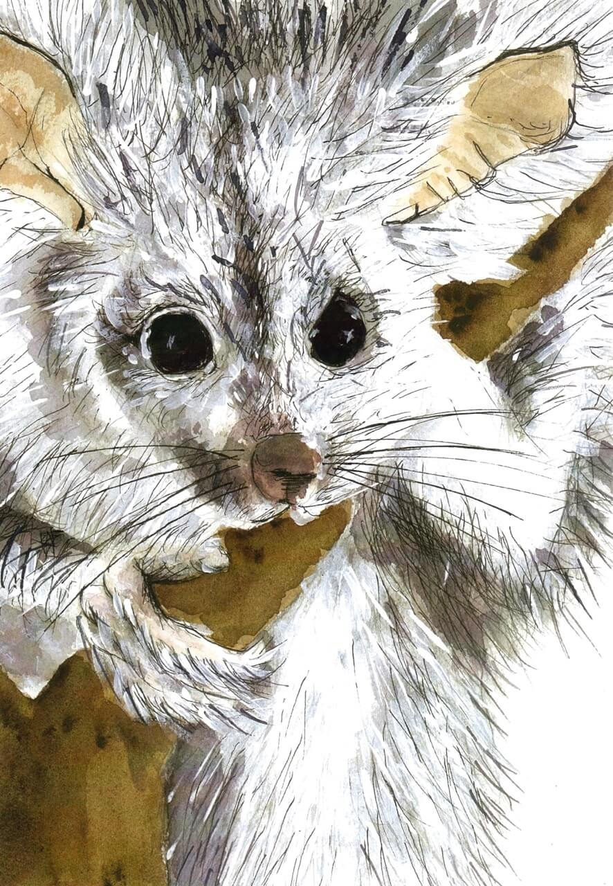Greater Glider by Kate Smith