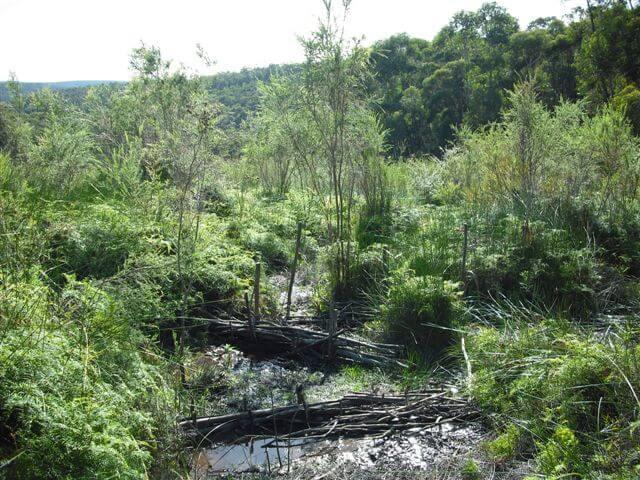 Kittyhawke Swamp