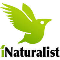 iNaturalist - Wikipedia